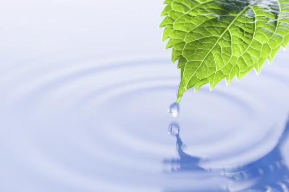 blad og vann